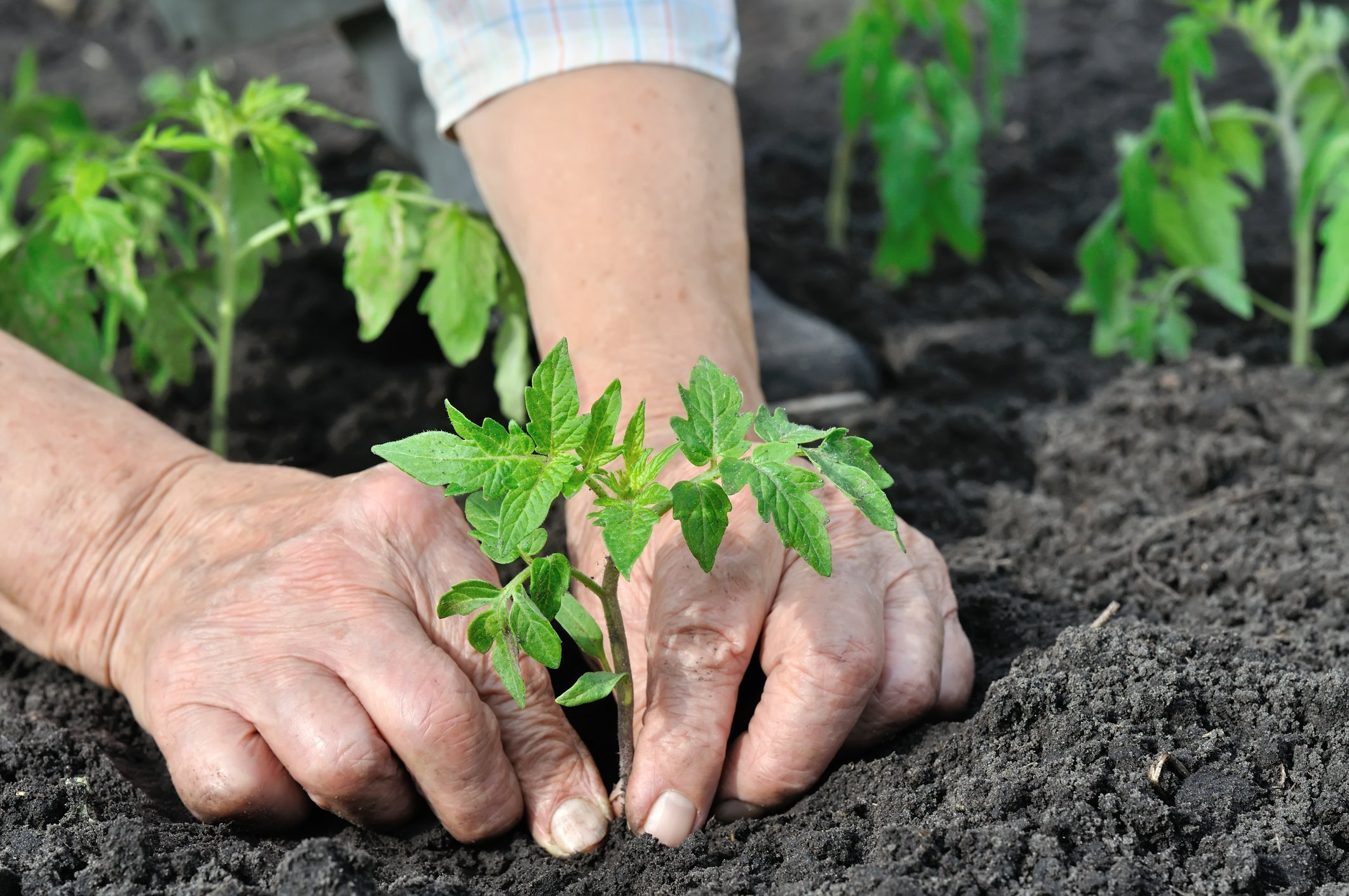 planter 2021
